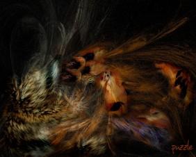 09042008_Apophysis feathers&fur01