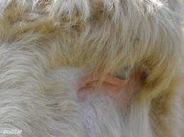 2009-04-19 Steppenzoo Pamhagen 034 WeisseEsel