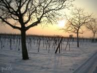 2010-01-23 ND nachmittags 034