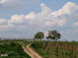 oberhalb von Neusiedl und Weiden