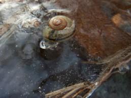 DSCN8589 2011-01-11 Sss_mo Schnecke&Eis