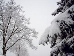 2009-02-23 morgensumkurznachsieben 05