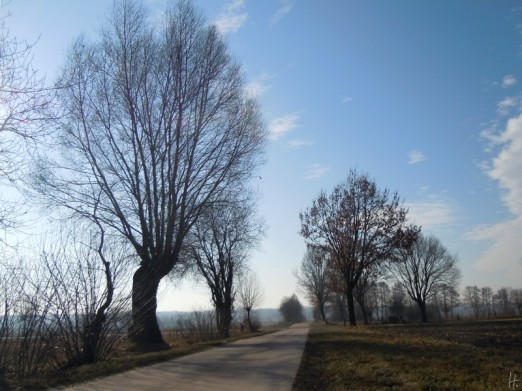 DSCN1238 2011-02-25 bLübbow Weg