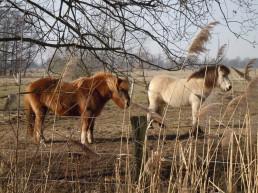 DSCN1243 2011-02-25 bLübbow Ponys
