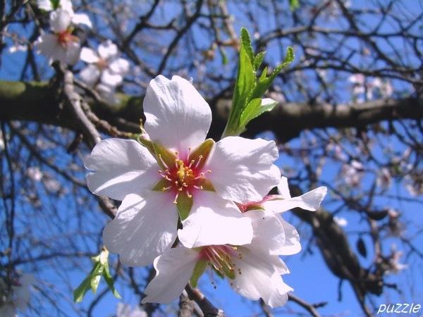 2008-03-15-ND-Mandelbaum03.jpg