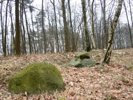DSCN1768 2011-03-02 bSchwiepke Wald