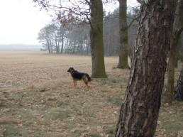 DSCN1771 2011-03-02 bSchwiepke Wald&Bongo