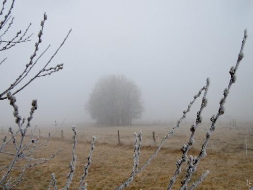 DSCN1886-2011-03-04-Sss-Weidenktzchen.jpg