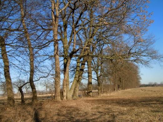 DSCN2240 2011-03-08 Reddebeitz Eichen