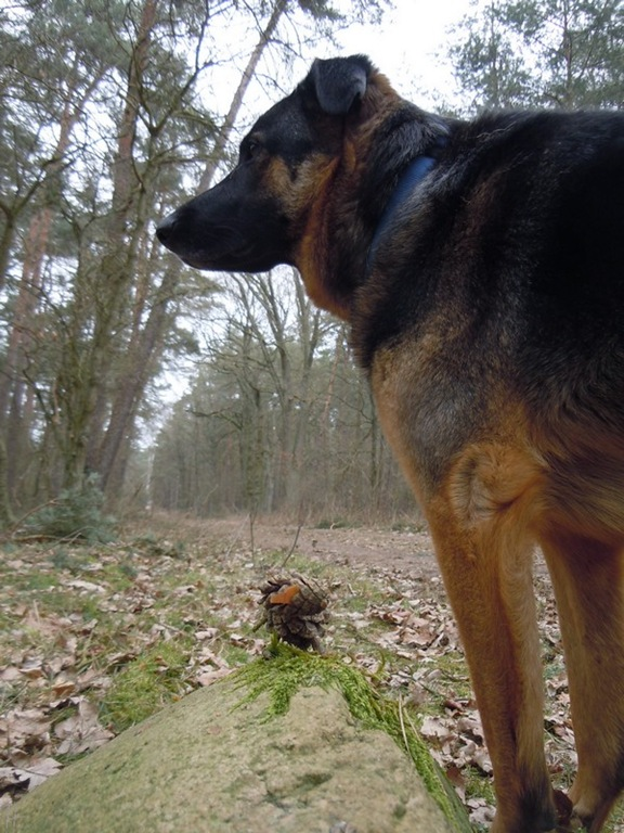 DSCN2371-2011-03-10-BselerWald-ZapfenschafHtehund-02.jpg
