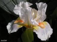 2009-04-19 009