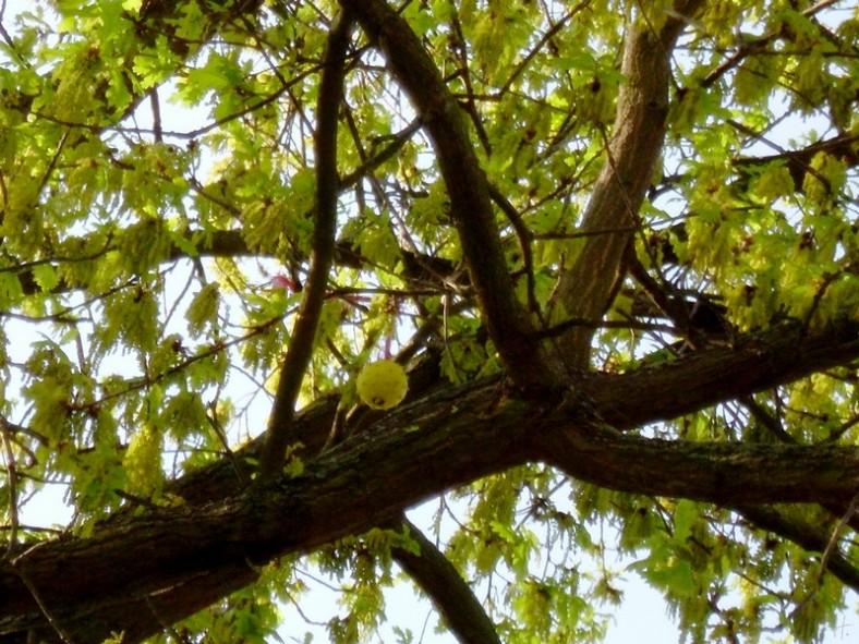 2011-04-22 Sss 060 BongosBall