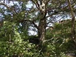DSCN2392 29042010NDnami Baum