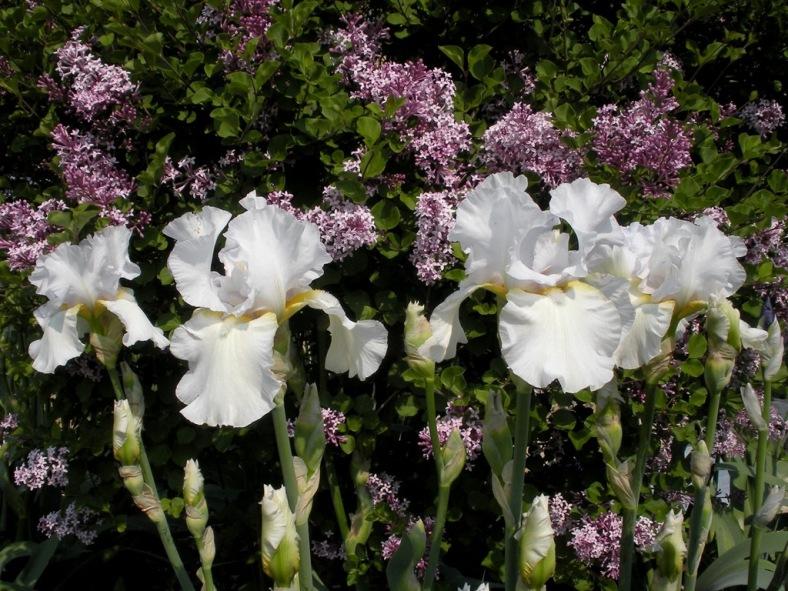 2009-05-01-021.jpg