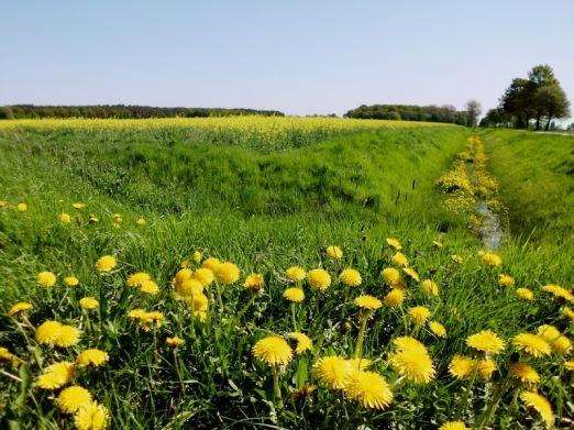 2011-04-30-AmAltenLchowerLandgraben-002-gelb.jpg