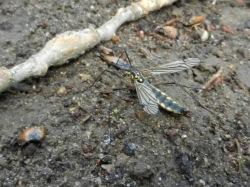 2011-05-23-LchowSss-027-Insekt.jpg