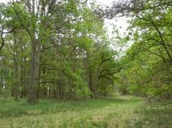 Teplinger Wald
