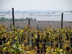 DSCN3344-20100507NDvomi-Wein.jpg
