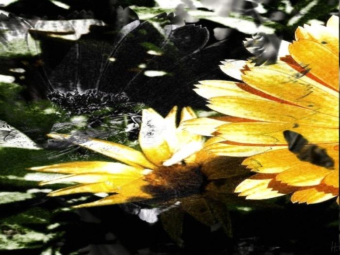 2009-06-30-RingelblumeStorchenschnabel-double-01.jpg