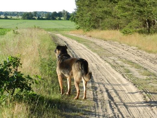 2011-06-04-BselerWald-014-Bongo.jpg