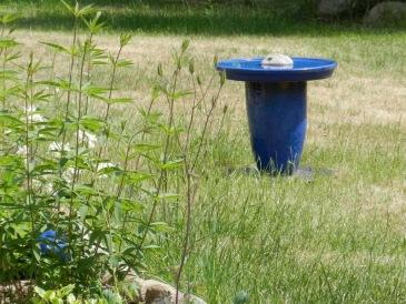 2011-06-06-LchowSss-Garten-029-Vogeltrnke.jpg
