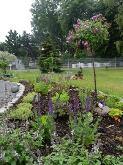 2011-06-07-LchowSss-Garten-125-VeilchenblauBongo.jpg