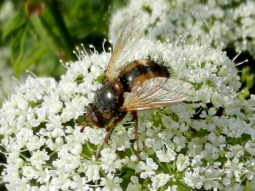 2011-06-12 bLübbow 151 Fliege+Giersch