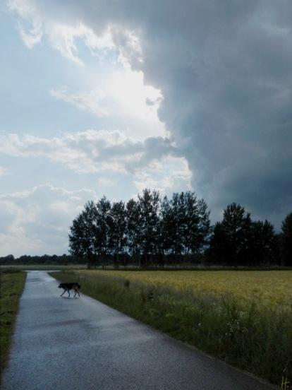 2011-06-20-LchowSss-076-GewitterwolkenBongo.jpg
