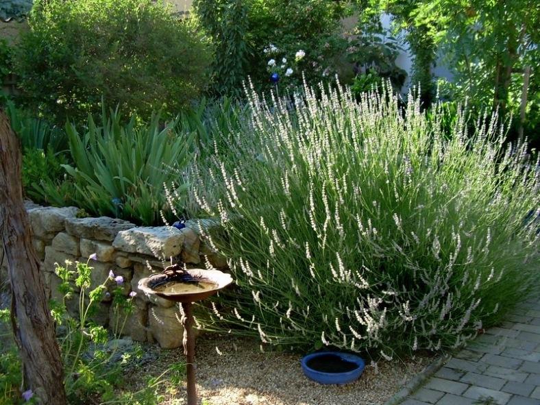 21062008-NDG-Lavendel-01.jpg