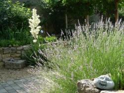 25062008 NDGarten 011 Lavendel+Palmlilie
