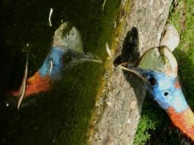 2011-07-28 Vogelpark Walsrode 023 Kasuar