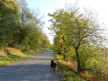 2011-10-16 Urlaub Neusiedl am See, Spaziergang mit Bongo - in ' Eine Art Urlaub – 15. bis 23. Oktober 2011 – Tag 2/8'  2011/10/29  puzzle
