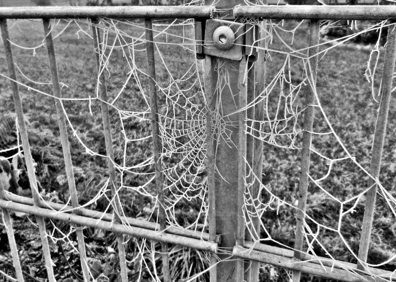 2011-11-13 LüchowSssGarten 229sw Zaun+Netz