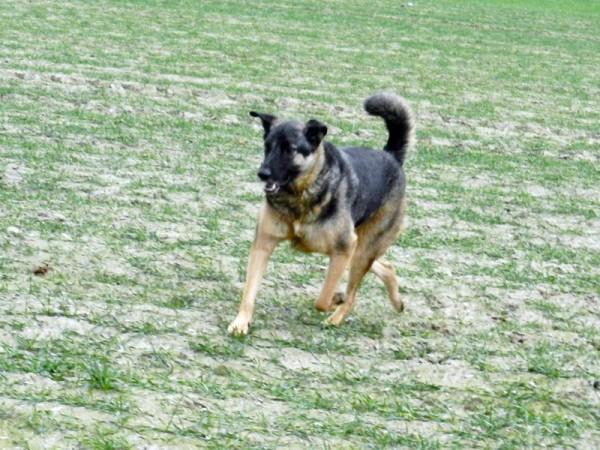 2011-11-27 LüchowSss 003 Bongo