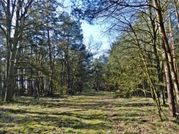 2012-03-28 bTeplingen 021 Wald