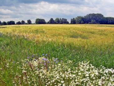 01-2012-06-17 LüchowSss 002 Gerstenfeld