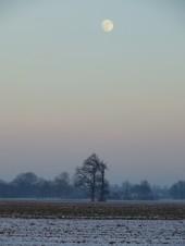 2013-01-25 LüchowSss 064 Mond+Eichen