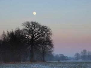 2013-01-25 LüchowSss 065 Mond+Eichen