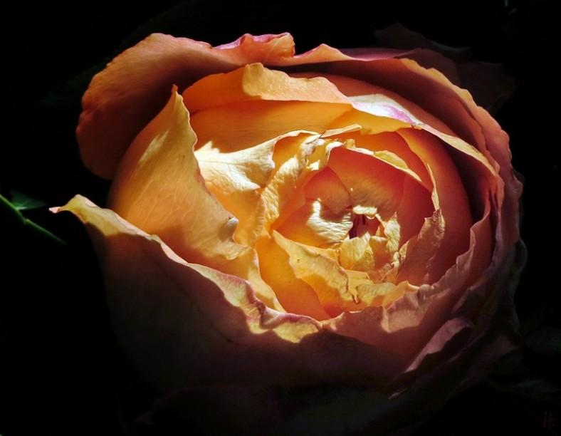 2013-04-14 GBTSdM 053A Rose