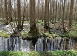 2013-04-19 bHoyersburg_SalzwedelerBürgerholz 206 Wasser