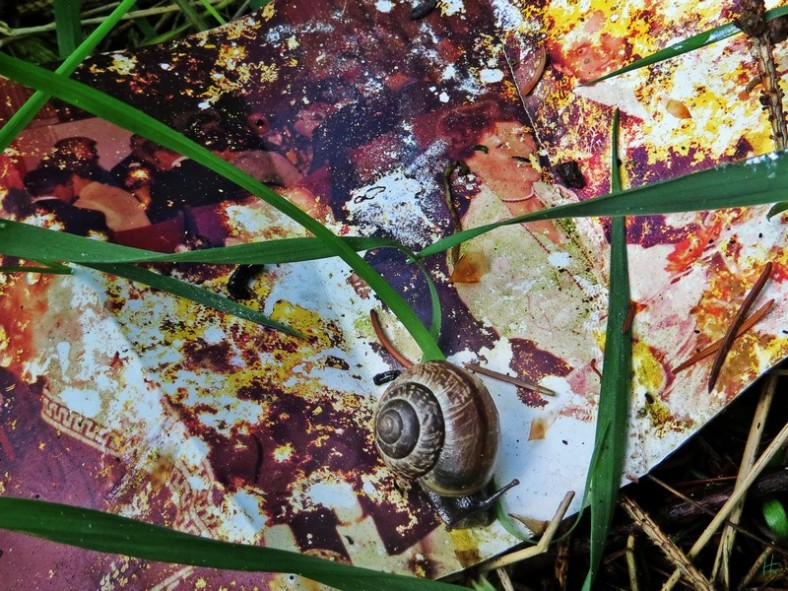 am Wegrand: altes Foto zusammen mit anderen Abfällen