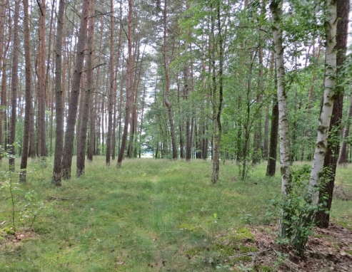 Böseler Wald
