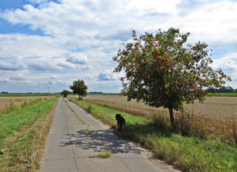... unter jedem Baum gibt es eine kleine Schatten-Pause
