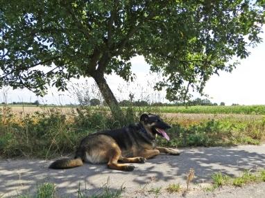 Bongo im Schatten eines Apfelbaums