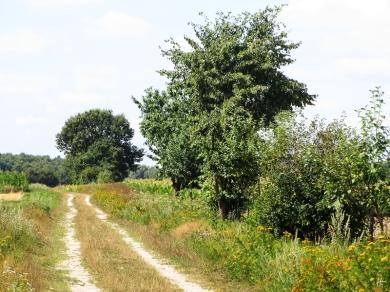 wieder mal zurück gesehen, zu Sonnenblumen und Kirschbaum/-strauch