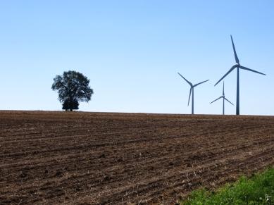 Eiche und Windräder bei Rebenstorf
