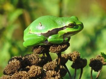 Bild zum F-Beitrag zum Projekt ABC: F wie Froschlurche