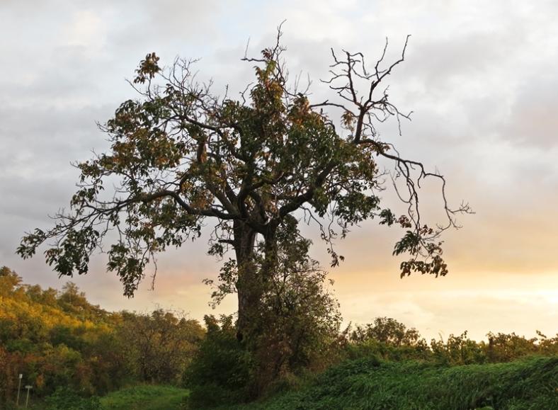 2013-10-16 bei Neusiedl / Weiden am See