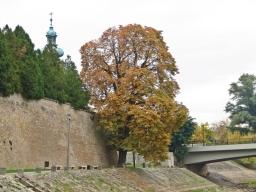 der barocke Kirchturm gehört der Karmeliterkirche, die Brücke führt auf die Insel