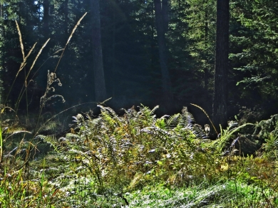 2013-10-19 11h Wald bei Hilpoltstein 006) Farn